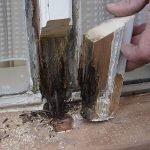 Was ist Holzfäule?
